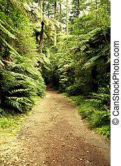 floresta, rastro