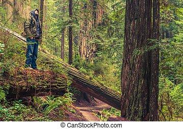 floresta, rastro, hiker