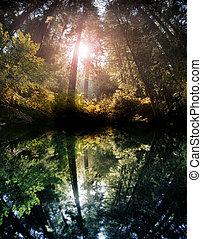 floresta, reflexão