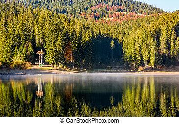 floresta, reflexão, ligado, nebuloso, superfície, de, synevyr, lago