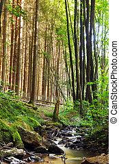 floresta, riacho