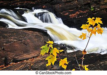 floresta, rio, em, a, outono