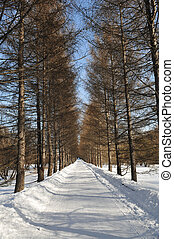 floresta, ruela, inverno
