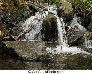 floresta, selva, riacho