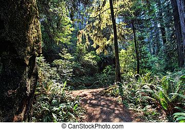 floresta, sunlit
