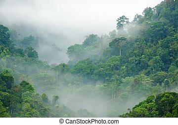 floresta tropical, manhã, nevoeiro