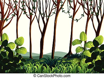 floresta verde, árvores, cena