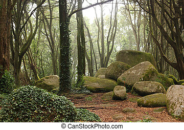 floresta verde, árvores, com, enorme, pedras
