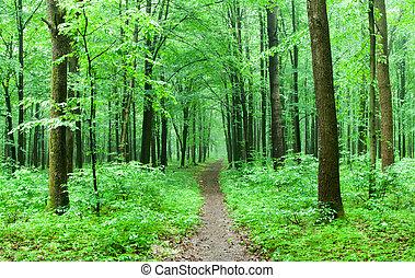 floresta verde