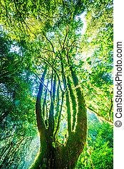 floresta verde, sunlight., natureza, grande, árvores