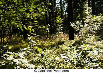 floresta, vista