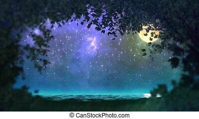 floresta, volta, noturna