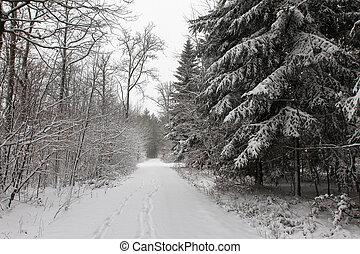 floresta, woods., inverno, nevado