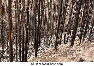 florestas, destruído, terribly, madeira, herança, mundo