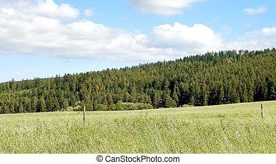 florestas, e, prados, em, a, tempo verão