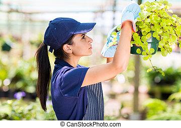floricultor, verificar, flores, condição