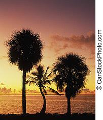 florida, öböl, -ban, napkelte
