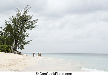 florida beach landscape