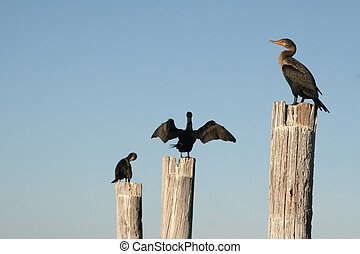 Florida birds on posts