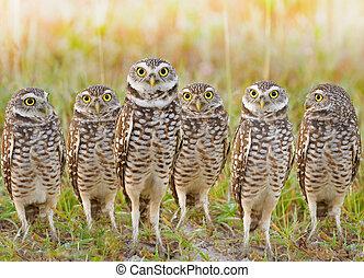 florida birds - Burrowing Owls annual meeting. Local gang....