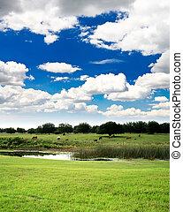 Florida countryside near a golf course