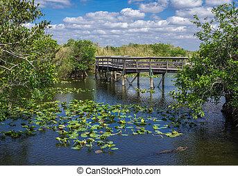 Florida Everglades Boardwalk - Anhinga Trail Boardwalk...