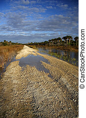 Florida Everglades - Scenic view of the Everglades in the...
