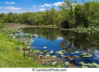 Florida Everglades View at Shark Valley showing Canal and...