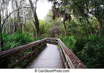 Florida Everglades Swamps