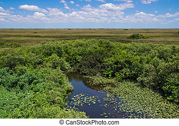 Florida Everglades View at Shark Valley showing Wetlands and...