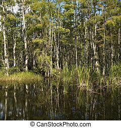 Florida Everglades wetland.