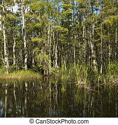 Florida Everglades wetland.
