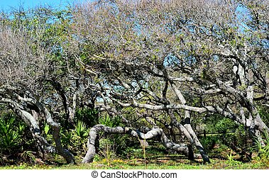 florida, függőágy, bitófák