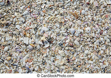 Florida Fort Myers beach sea shells sand US