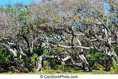 florida, hängmatta, träd