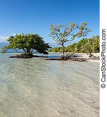 Florida Keys Anne's Beach - Anne's Beach by roadside in...