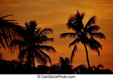 Florida Keys. Palm Trees in Sunset Florida, USA