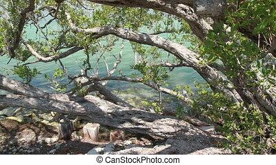 Florida Keys trees and water - Tropical Florida Keys trees...