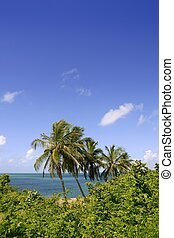 Florida keys tropical park with palm trees end blue ocean