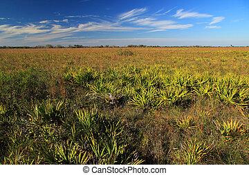 Kissimmee Prairie - Florida, Kissimmee Prairie Preserve...