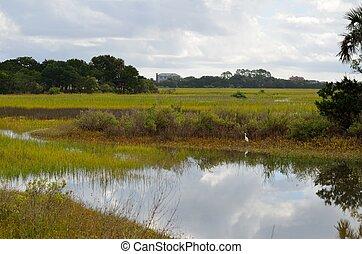 Florida Marsh Land
