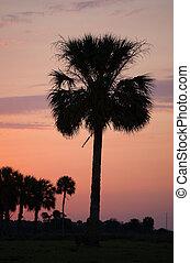 Florida morning