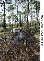 Florida Prairie Wetland at Tarkiln Bayou Preserve State Park...