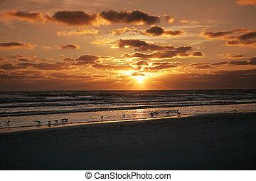 florida, solnedgang