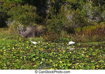 Florida Wetland Birds Landscape