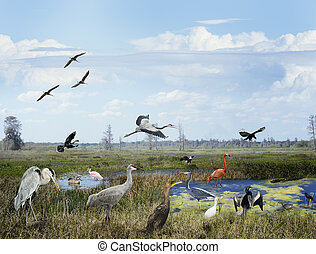 florida, wetlands, collage