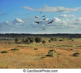 Florida Wetlands Scenic View