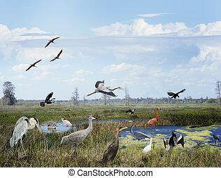 floride, wetlands, collage