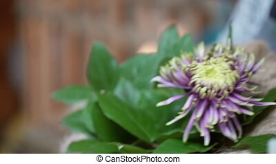 Florist inserts a long stem in a pot with a large purple flower.