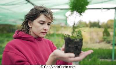 Florist inspects the plant. Control and verification of ...